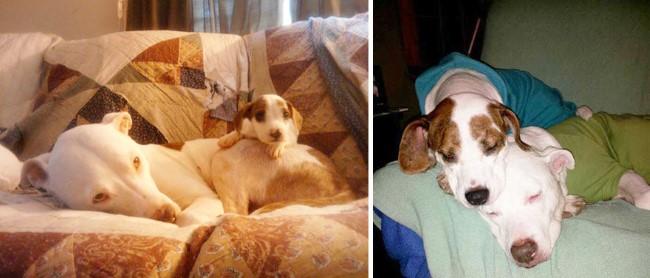 antes-e-depois-cachorros-23