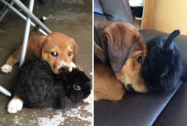 antes-e-depois-cachorros-4