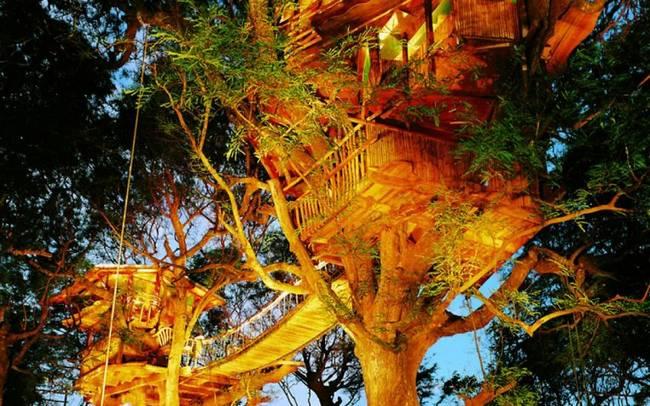 construções-que-os-arquitetos-não-arrancaram-as-árvores-13