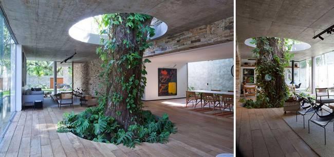 construções-que-os-arquitetos-não-arrancaram-as-árvores-4