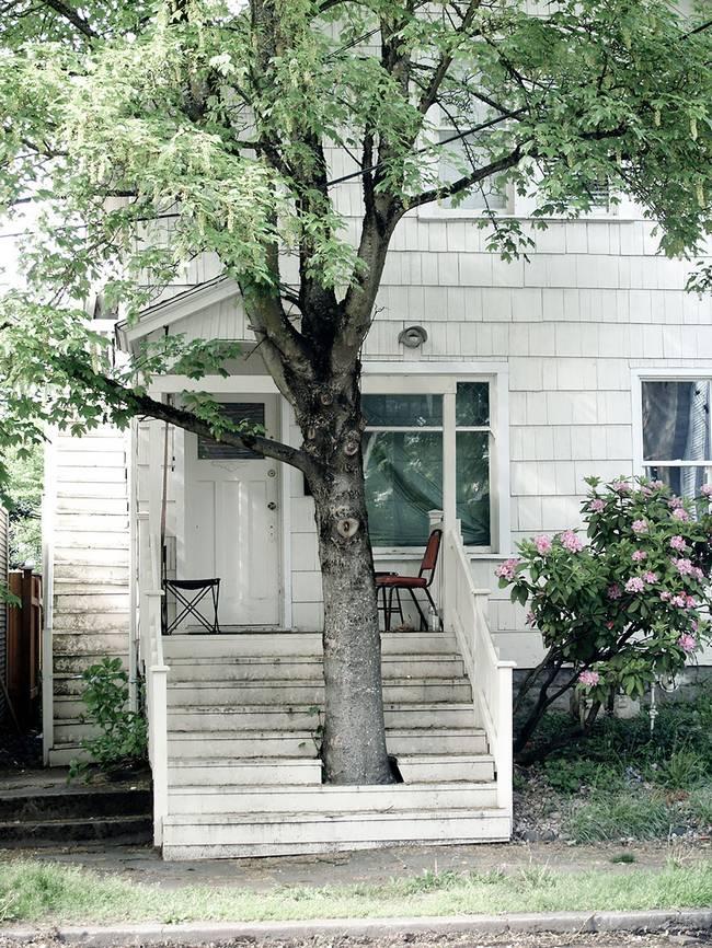 construções-que-os-arquitetos-não-arrancaram-as-árvores-9