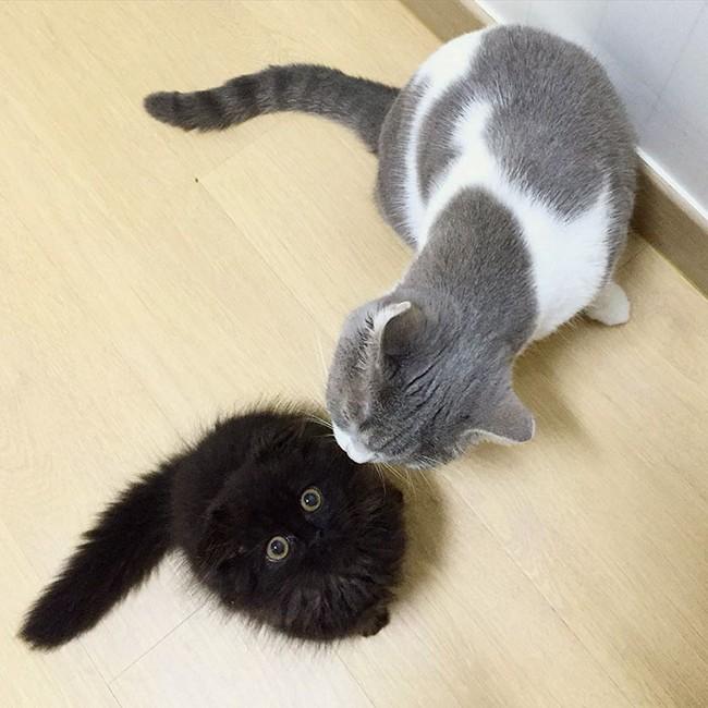 gimmo-gato-10