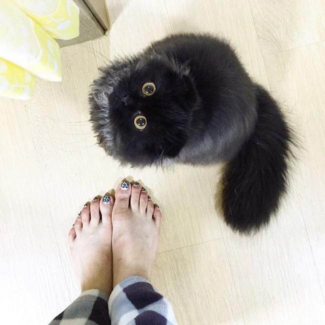 gimmo-gato-13