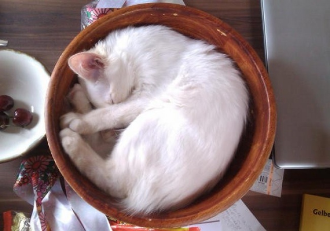 achar-gato-8