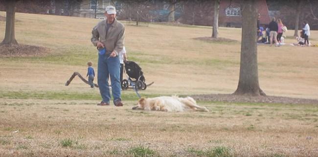 perro finge la muerte de más tiempo-parque-1-