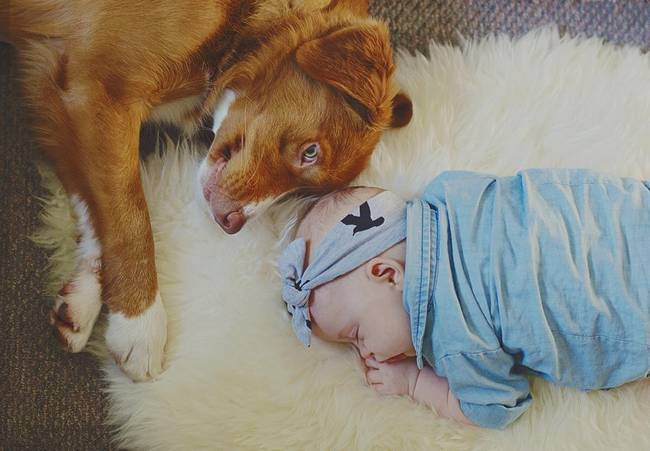 cachorro-crianca-9