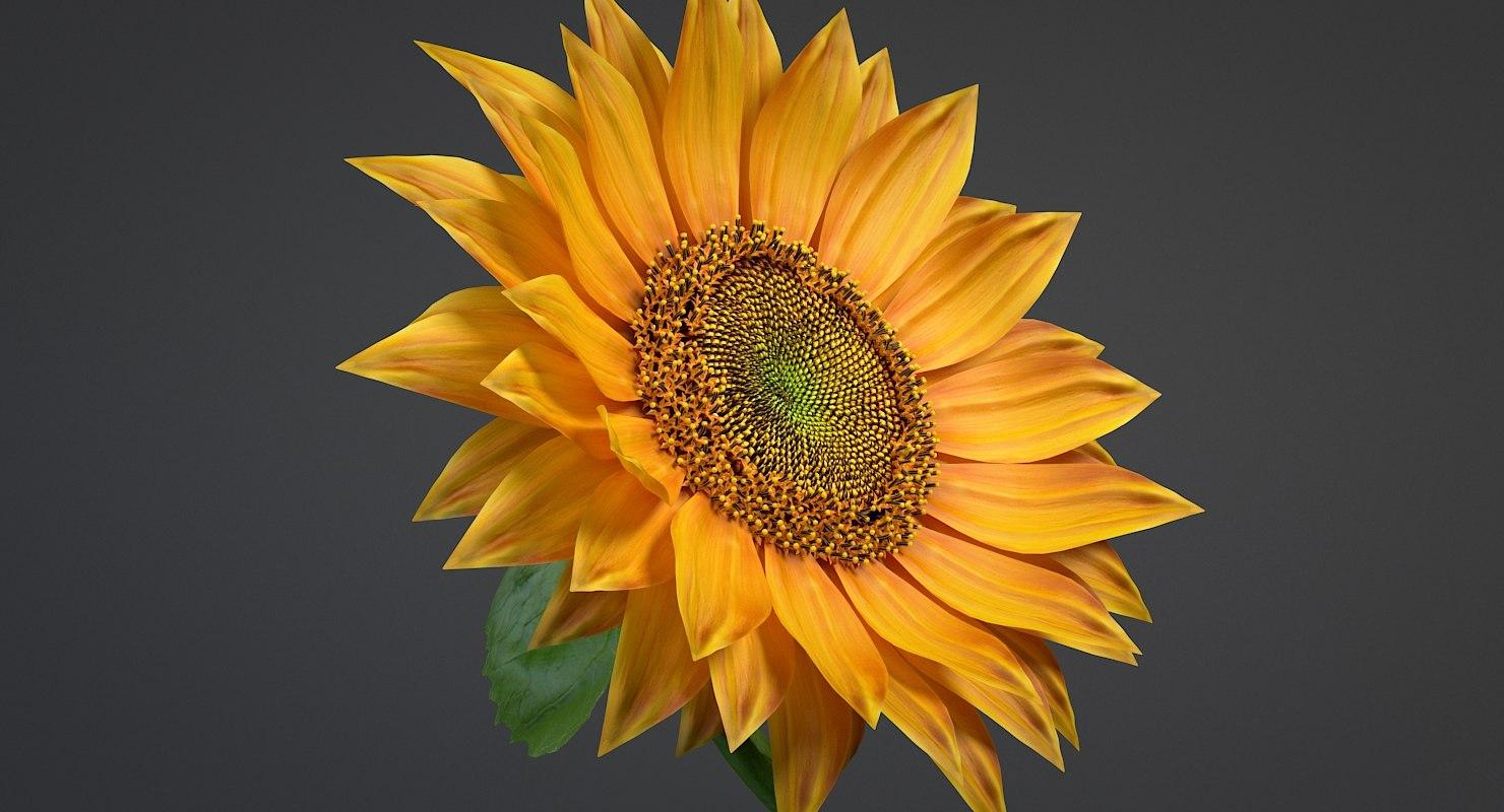 Sunflower Obj Model Free