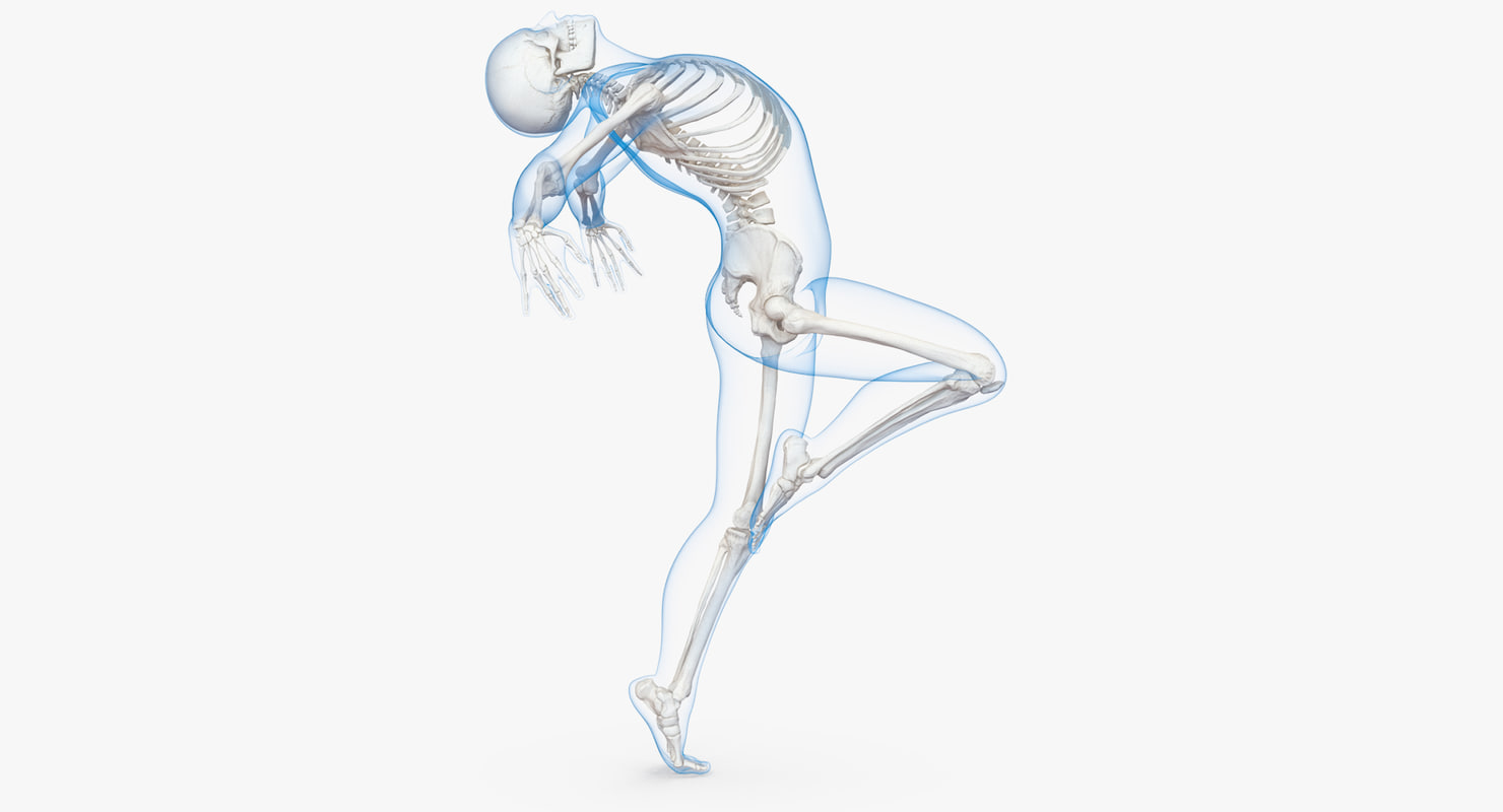 Male Body Skeleton Ballet 3d