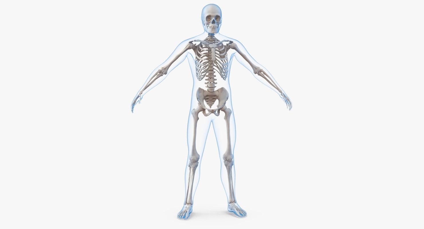 Male Body Skeleton 3d Model