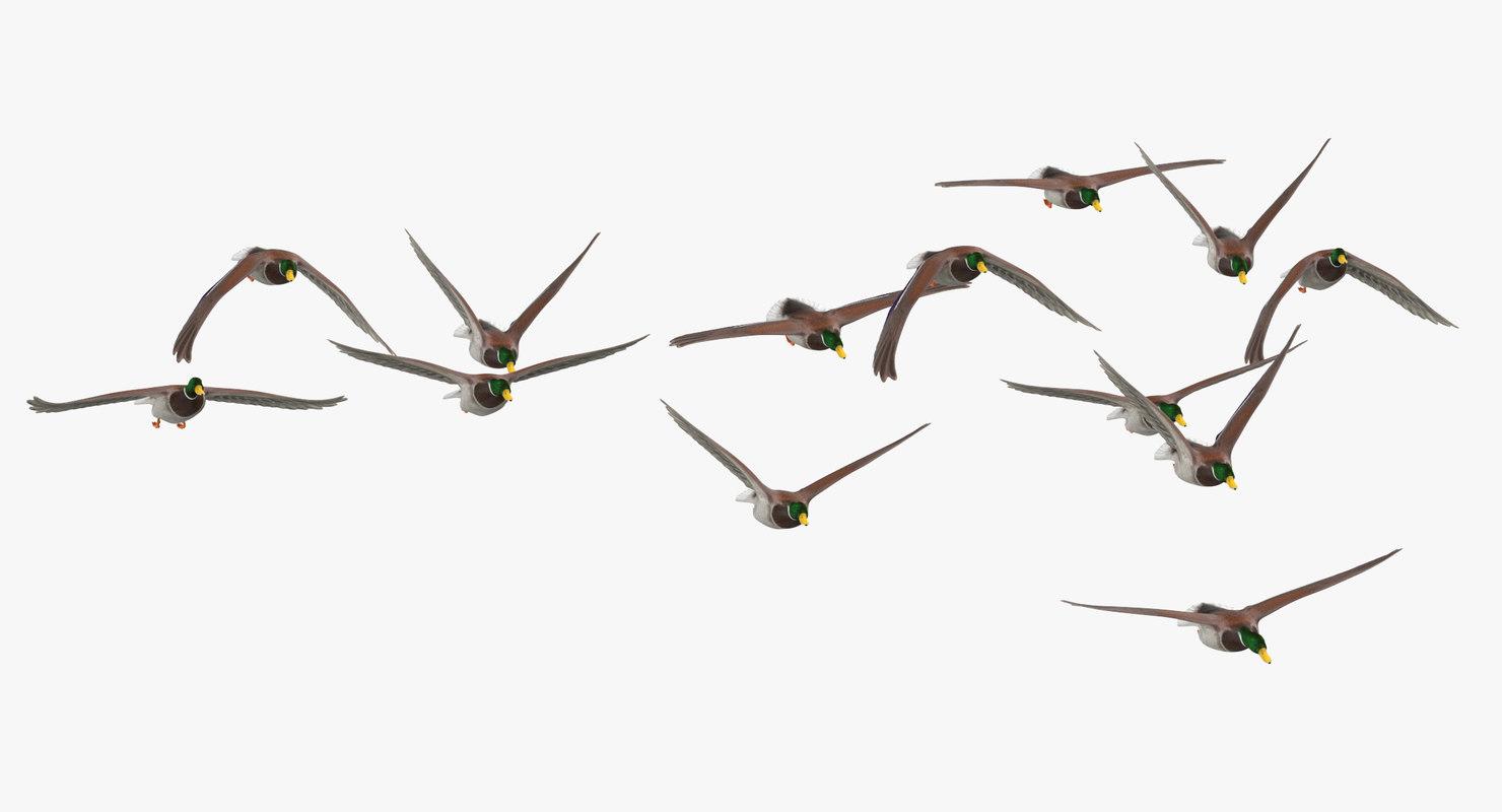 3d Small Flock Ducks Flying Model