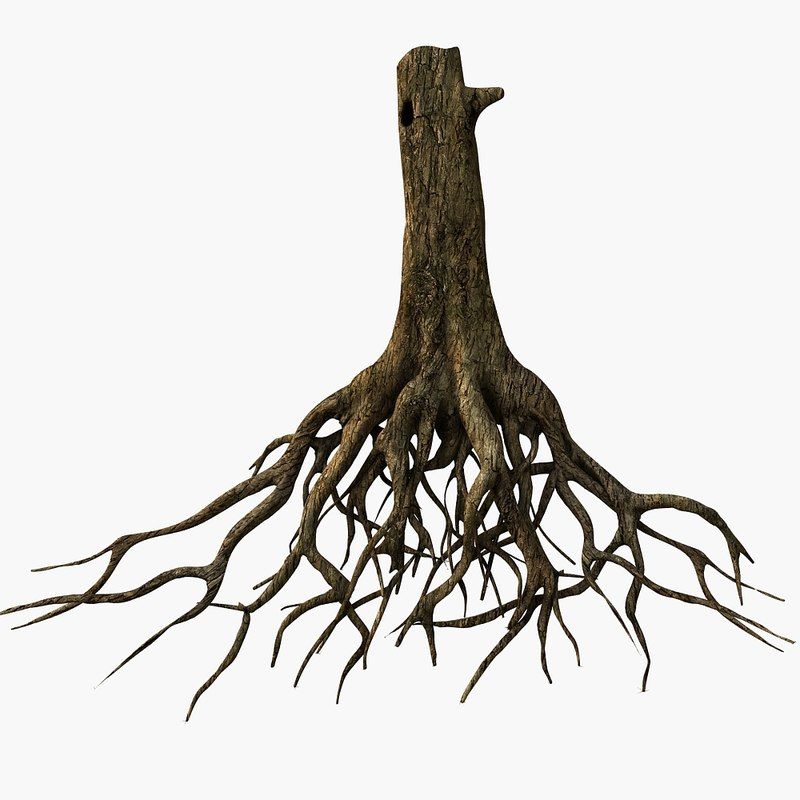 Real Tree With Roots Showing