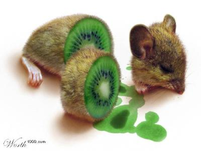 kiwi mouse. worth1000.com