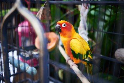 Singapore Haji Lane Parrot