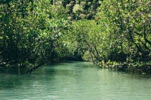 Thalan Bay Mangrove