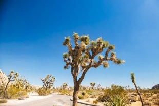 California Roadtrip Roserbrother-137