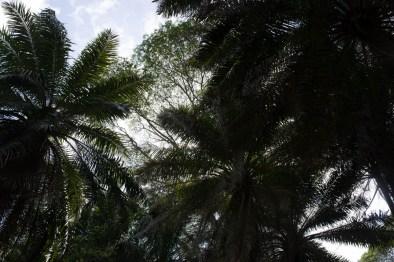 seychellen palmen