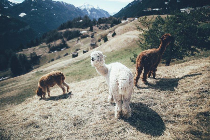Wandern in Serfaus