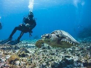 Meeresschildkröten sieht man in Cozumel nicht selten - noch!