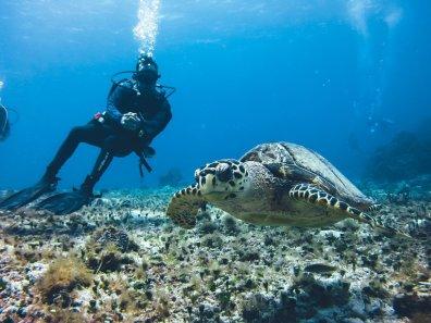 Meeresschildkröten sieht man in Cozumel nicht selten