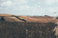 goldene Felder in der Toskana
