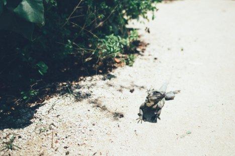 Yucatan uberding