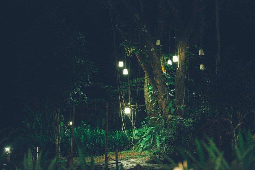 Mae Hong Son Fern Resort Lichter Baum