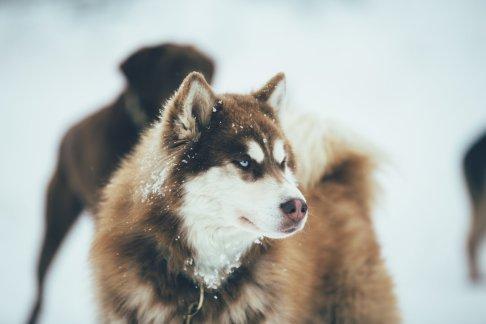 Wintersport Bucketlist Hundeschlitten Workshop
