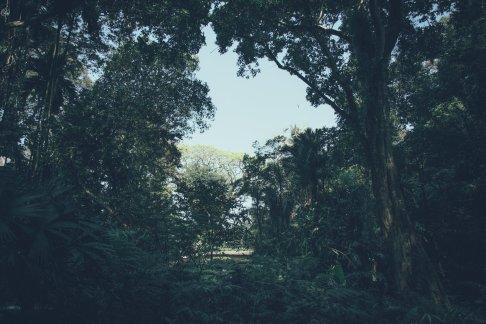 Aussicht von der Riesen Schaukel im Tropical Spice Garden