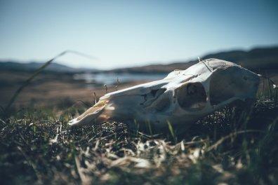 Friedhof der Hirsche auf der Insel Jura