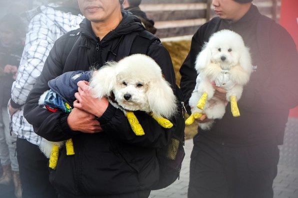 Die Hunde des Königs von Thailand