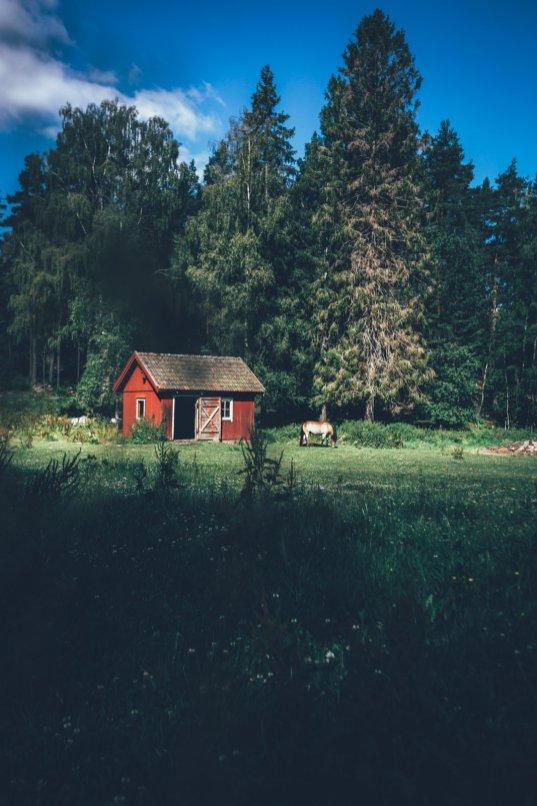 Ein Tag in Eriksgarden - Vimmerby