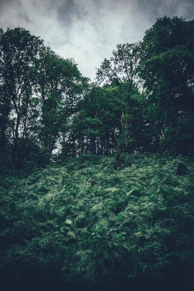 Natur um Glengoyne