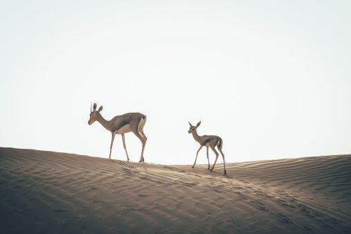 Wüstenbewohner
