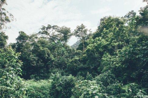 Gorilla-Trekking im Bwindi Nationalpark
