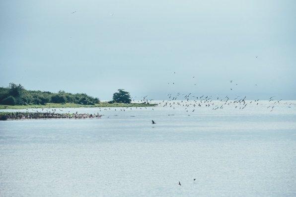 Vögel im Queen-Elizabeth-Nationalpark