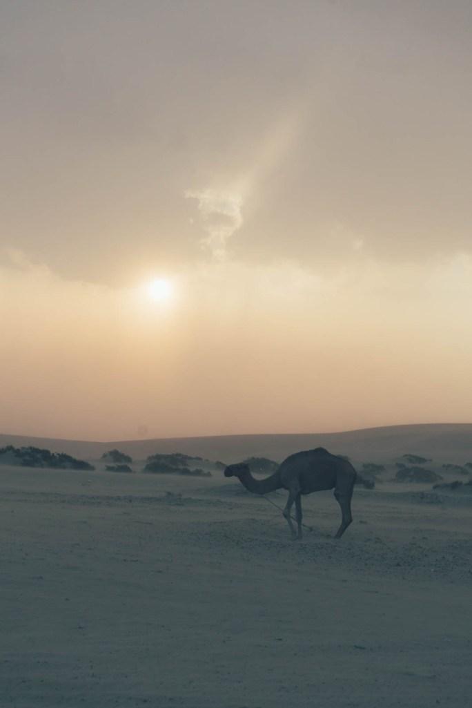 Die Wüste von Qatar