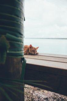 """Die Katzen der """"Blue Lagoon"""" auf Aitutaki leisten uns Gesellschaft"""