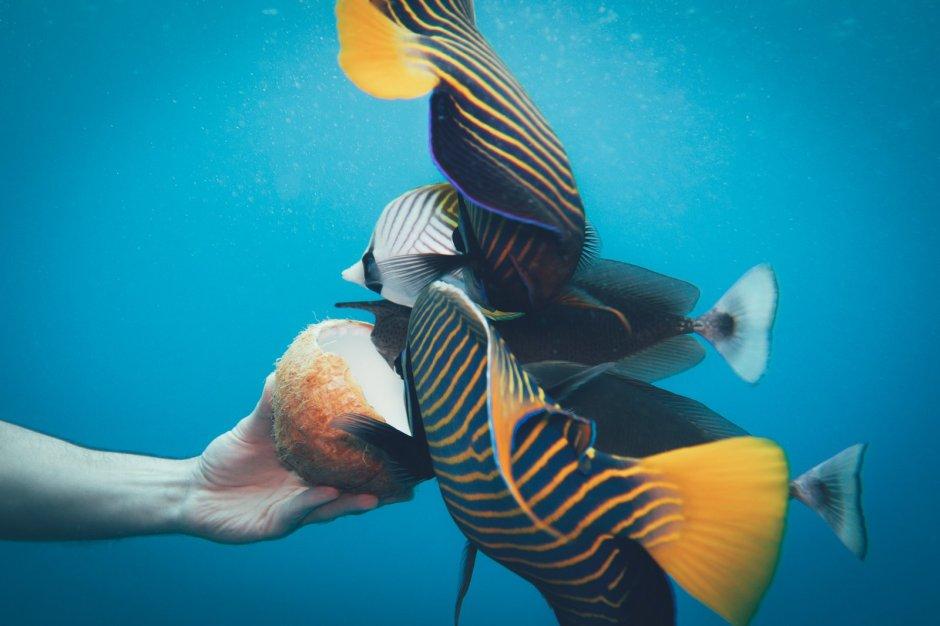Die vielleicht schönste Lagune der Welt - Aitutaki
