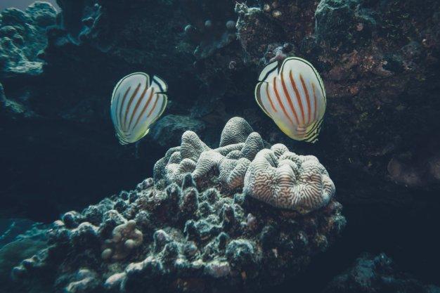 Tauchen auf den Cook Islands