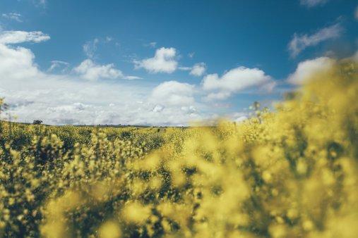 Felder auf der Curringa Farm - Tasmanien