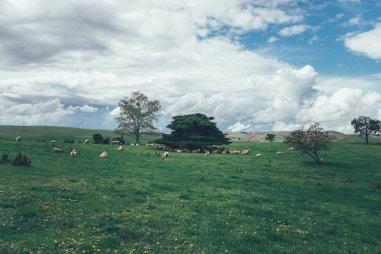 Curringa Farm - Tasmanien