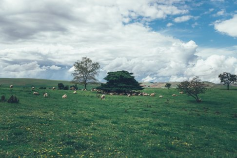 Curringa Farm - Tasmanien
