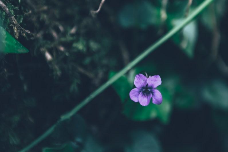 Die Kanalinseln sind für ihren Blumenreichtum bekannt