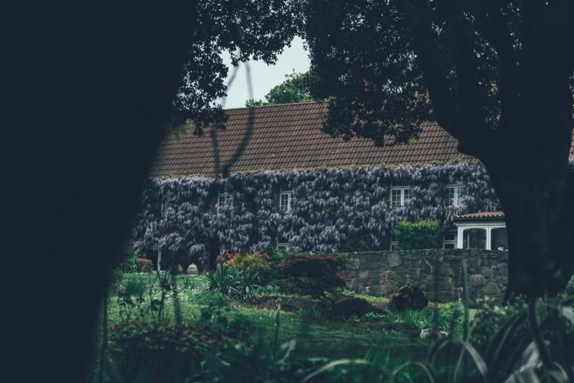Blühende Hausfassade