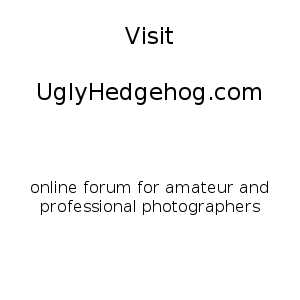 https://i1.wp.com/static.uglyhedgehog.com/upload/2015/4/2/1428006593438-c7.jpg