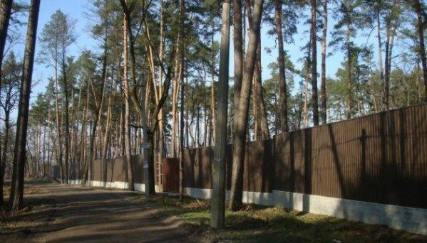 Картинки по запросу бучанський ліс