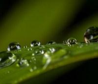 Синоптики обещают до 24° тепла, местами грозовые дожди