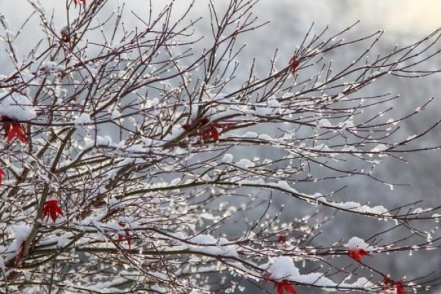 В Карпатах выпало 80 см снега