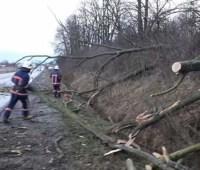 Сильный ветер бушует на западе Украины: падают крыши, деревья, нет света