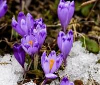 Капризы весны: украинцам обещают снег с дождем и плюс 17°